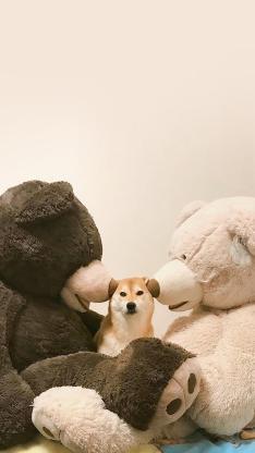 柴犬 公仔 毛绒玩具 大熊