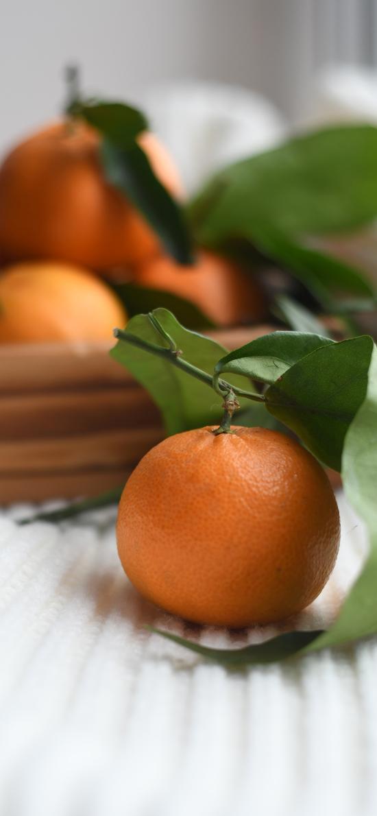 橘子 柑橘 桔子 水果