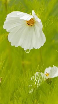 鲜花 水珠 绿草 盛开 花蕊