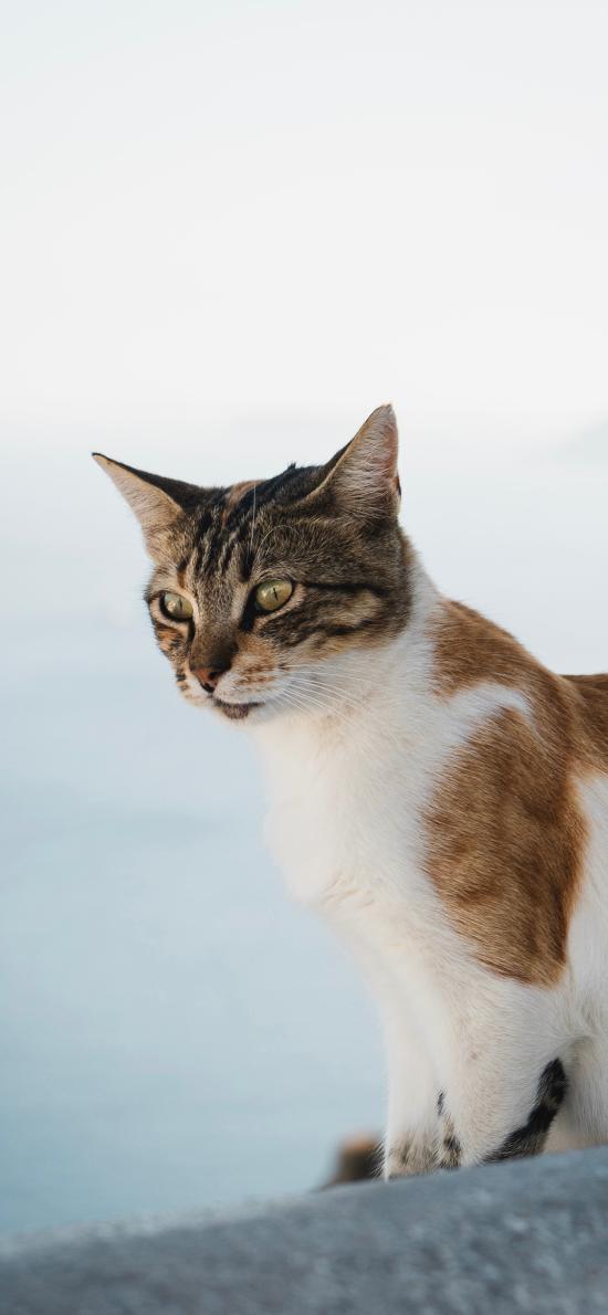 猫咪 皮毛 花猫 野猫