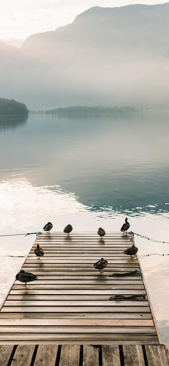 码头 鸟群 水面 雾气