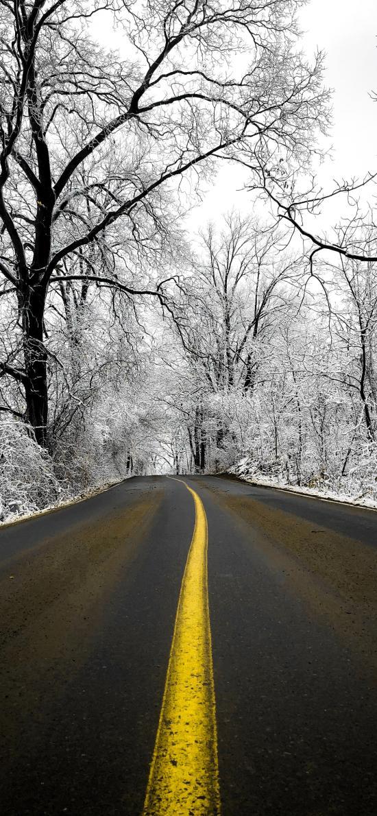 车道 树木 白雪覆盖 寂静