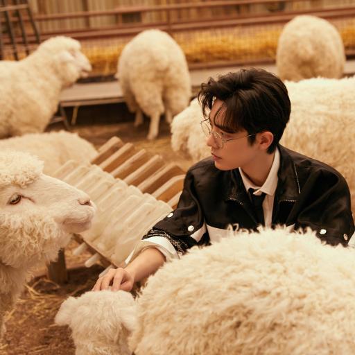 艺人 绵羊 羊群 肖战 演员 歌手