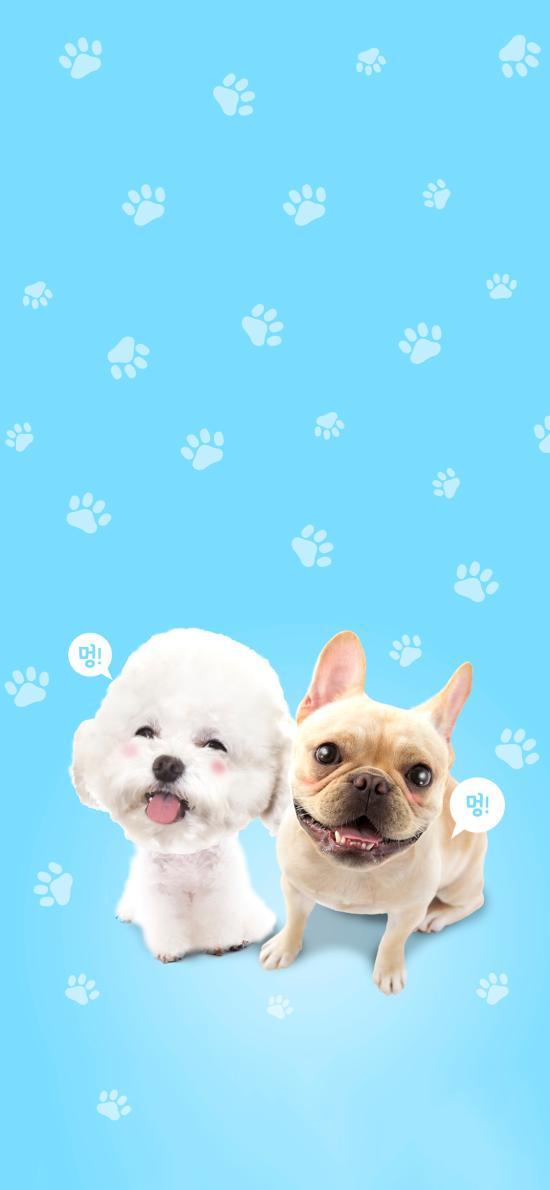 宠物狗 比熊 斗牛犬 可爱