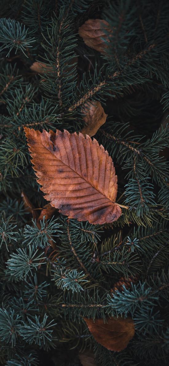 松树 松针 树叶 落叶