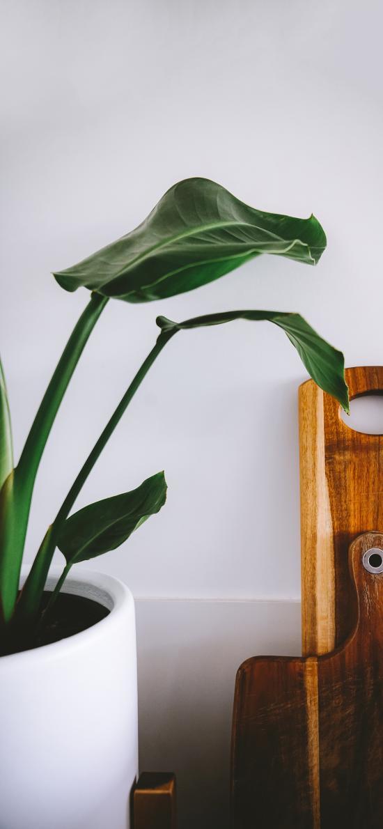 绿植 盆栽 绿化 砧板