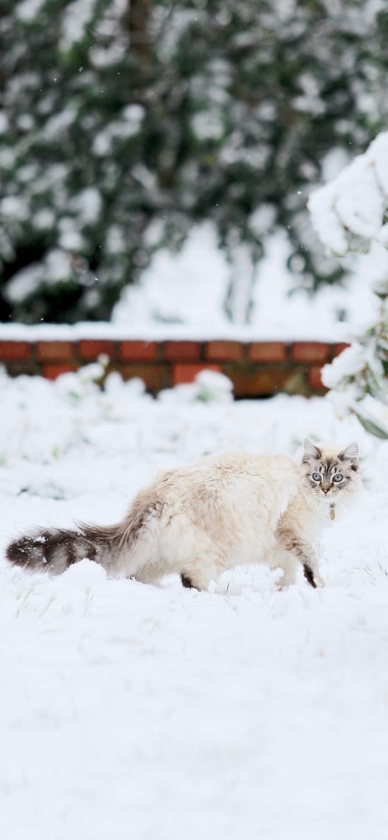 雪地 猫咪 喵星人 长尾巴