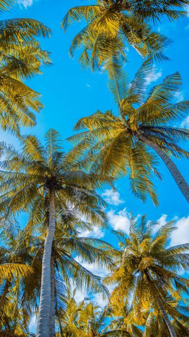 椰树 树木 天空 蔚蓝