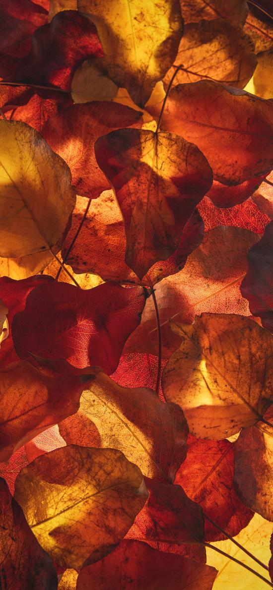 落叶 枯黄 平铺 凋零