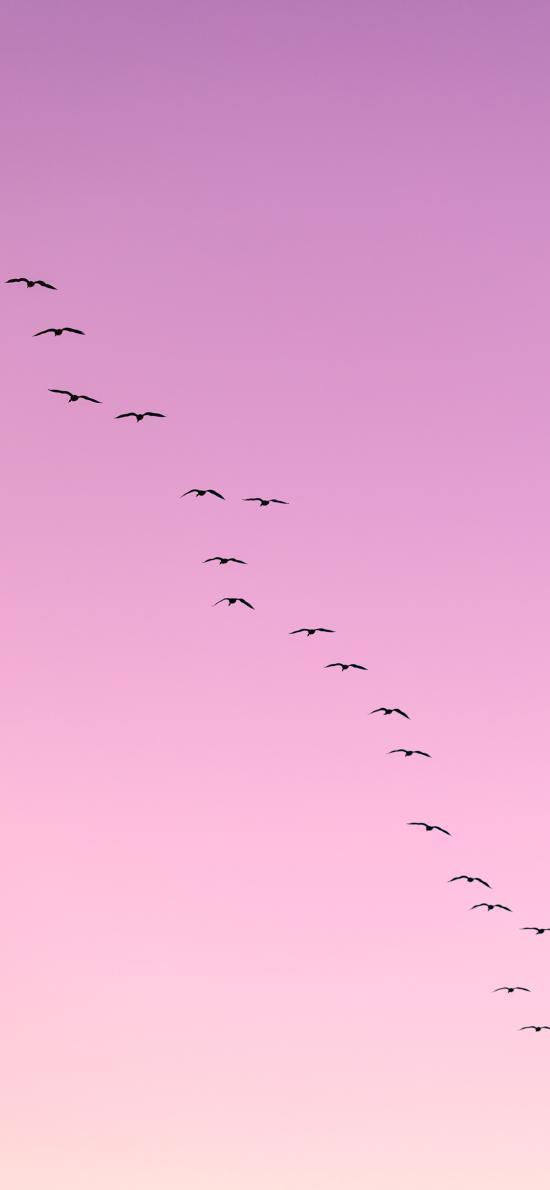 云空 渐变 飞鸟 迁徙