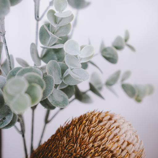 绿植 尤加利叶 帝王花 花苞