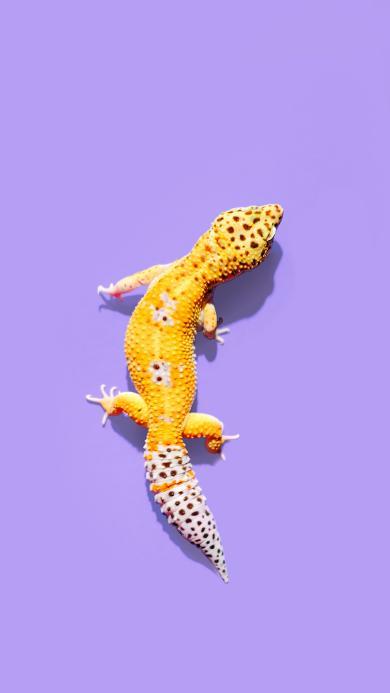 宠物 蜥蜴 色彩 鲜艳