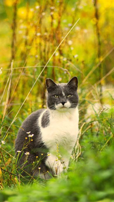 猫咪 宠物 黑白 草地