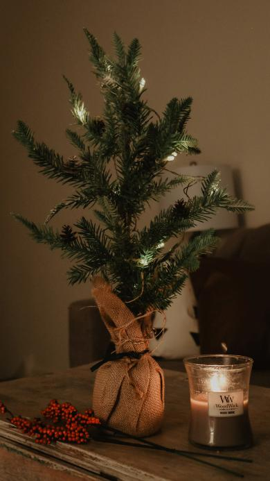 圣诞 树枝 蜡烛 烛火
