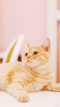 猫咪 宠物 橘猫 可爱