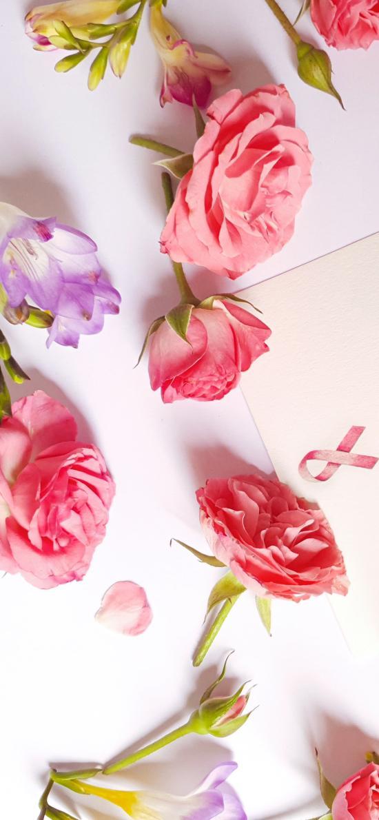 鲜花 花朵 信封 花苞