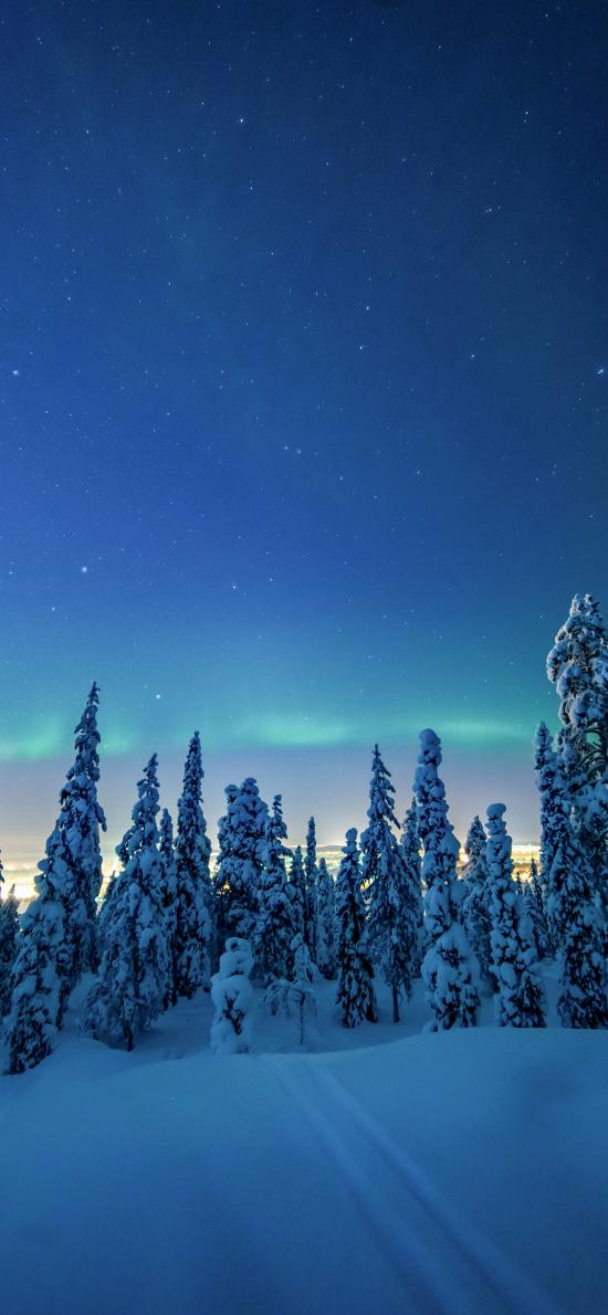 冬季 雪地 树木 极光 美景