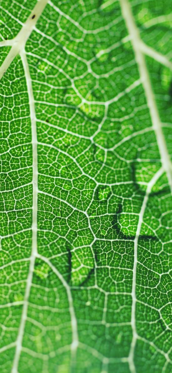 树叶 绿叶 纹理 水珠