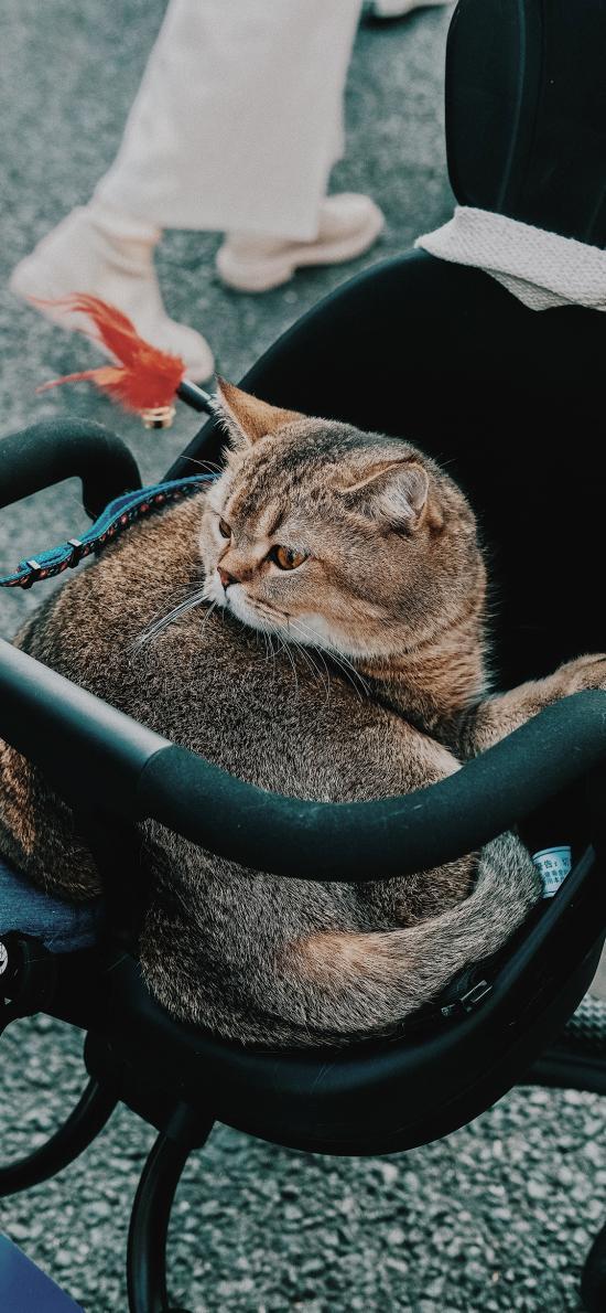 婴儿车 宠物 猫咪 喵星人