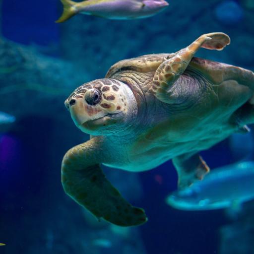 海龟 游动 海洋 海鱼