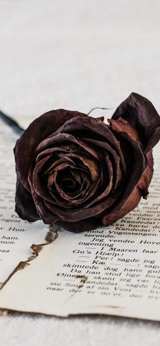 书籍 玫瑰花 干花 黑色