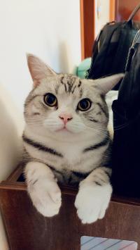 猫咪 喵星人 可爱 萌 宠物