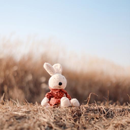 玩偶 草地 玩偶 玩具 户外