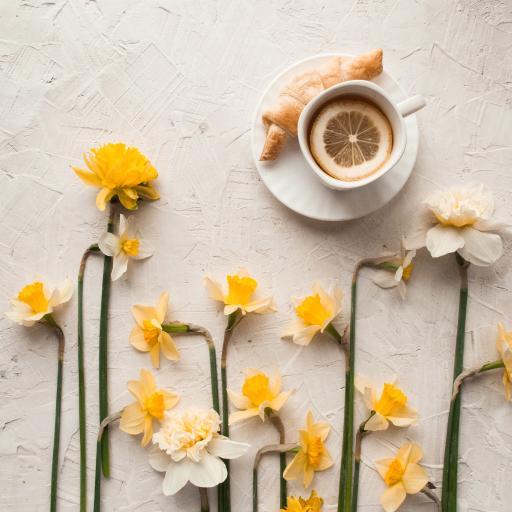 水仙 鲜花 花朵 柠檬 牛角包