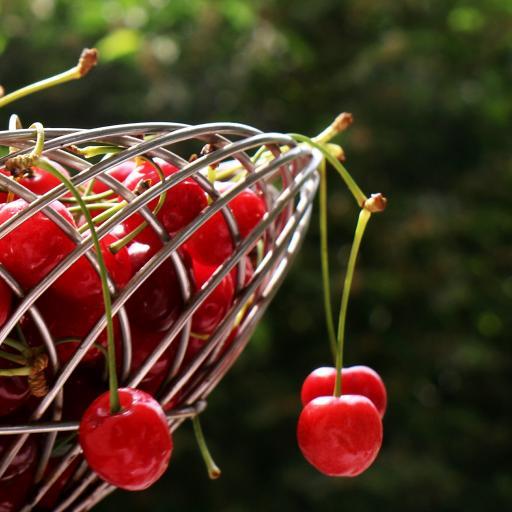 樱桃 水果 果盘 车厘子