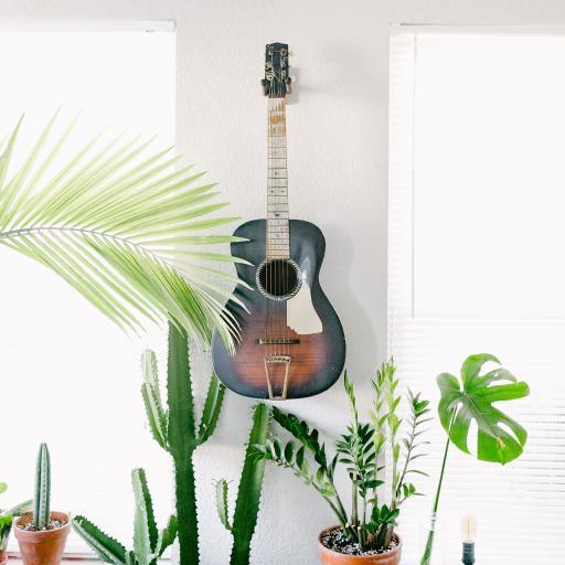 盆栽 绿植 吉他 乐器