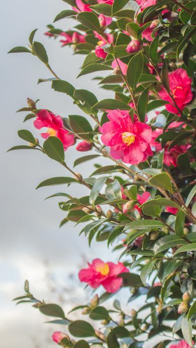 鲜花 花季 盛开 花朵 枝叶