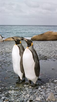 南极 企鹅 保护 两栖动物