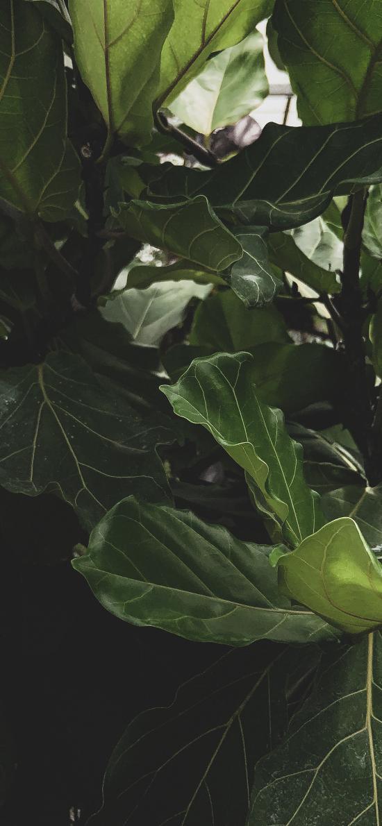 枝叶 叶子 盆栽 绿色