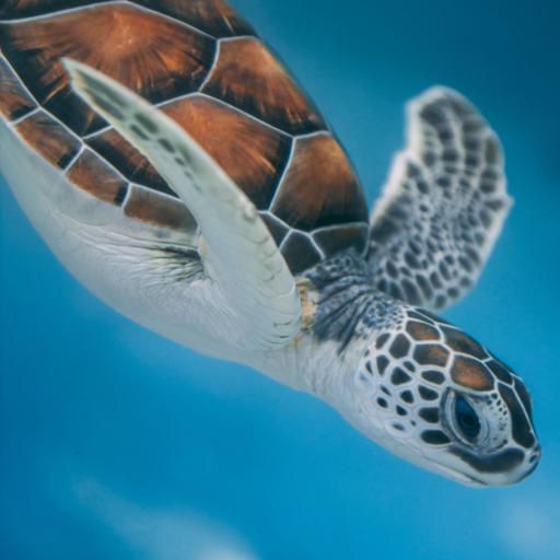 海龟 海洋生物 遨游 长寿