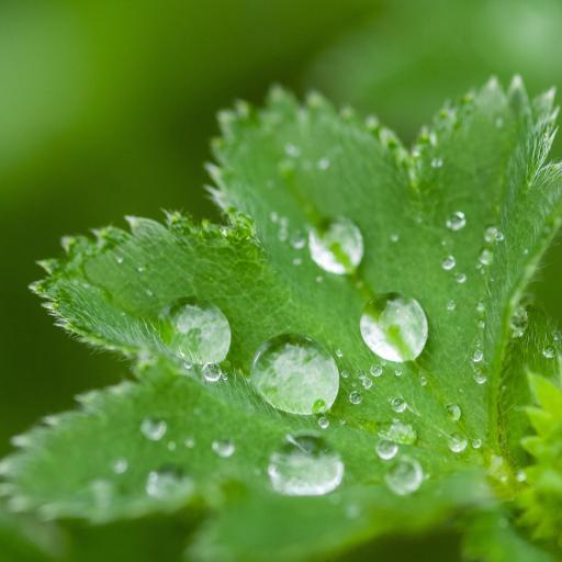 绿叶 水珠 露珠 枝叶