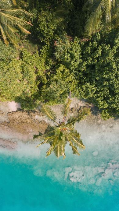 海岸 海边 椰树 海水