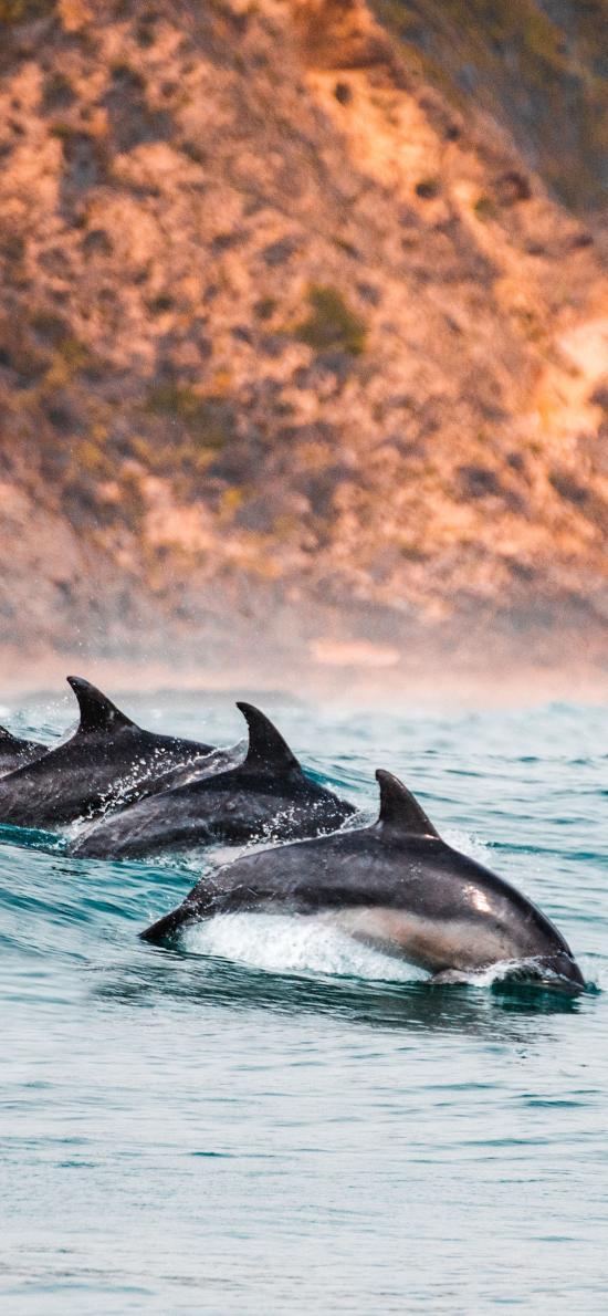 海豚 海洋 跳跃 大海