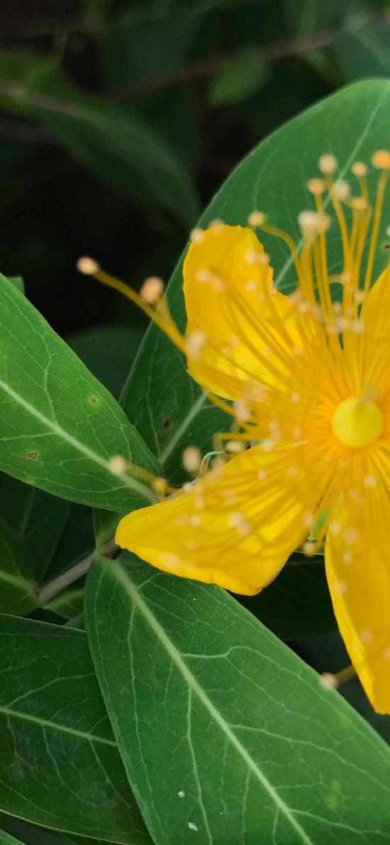 鲜花 花朵 绿植 枝叶