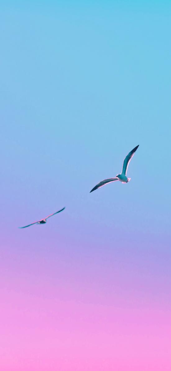 鸟 太空 渐变 飞翔