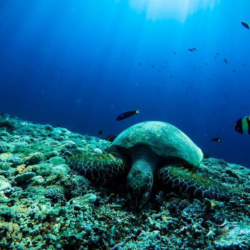 海龟 海洋 海底 珊瑚