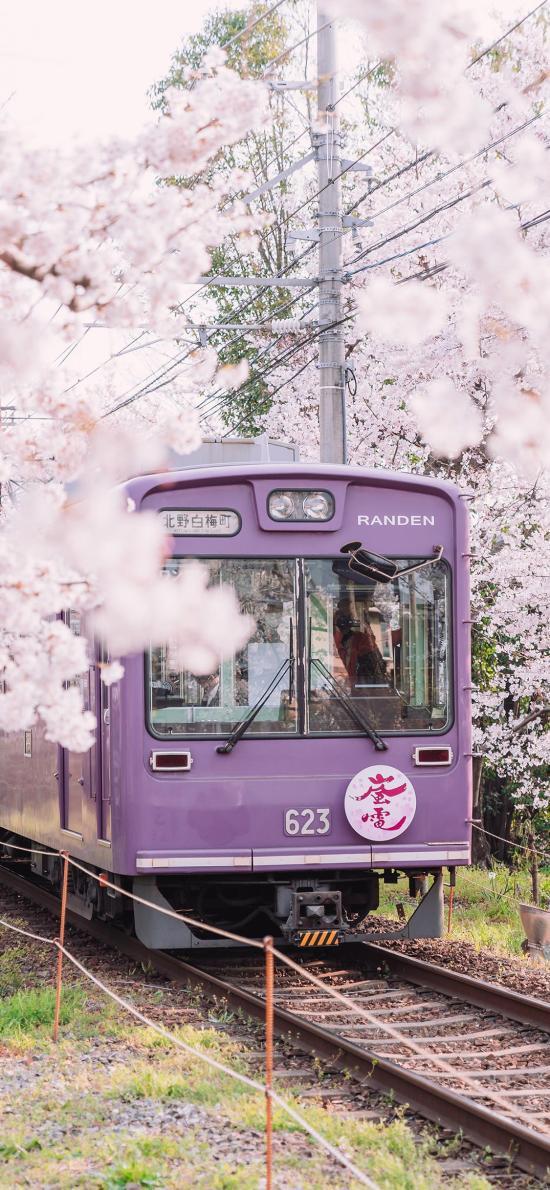 火车 樱花 日本 列车 行驶 春天