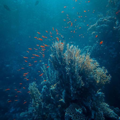 海底 海洋 珊瑚 鱼群
