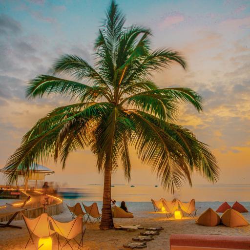 海岸 沙滩 度假 椰树 椅子