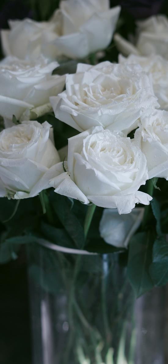 玫瑰 鲜花 盛开 插花 花艺