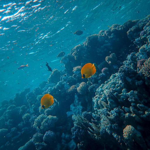 海洋 海底 珊瑚 鱼群