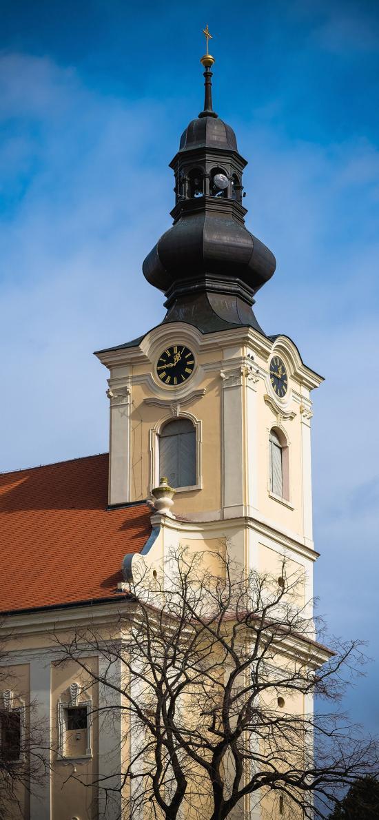 建筑 教堂 钟楼 树木