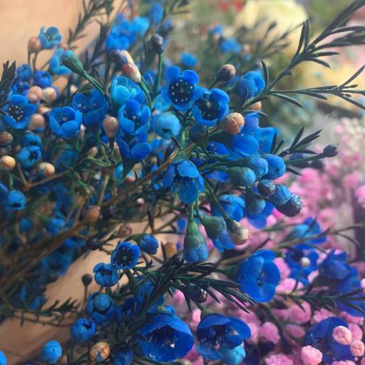 鲜花 花朵 花苞 枝叶