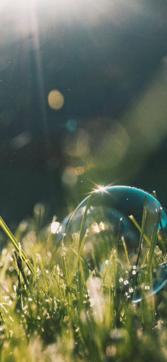 泡沫 气泡 草地 阳光