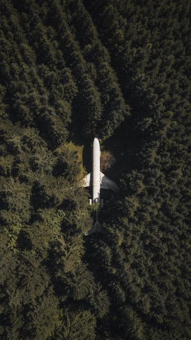 飞机 森林 树林 航拍 航空