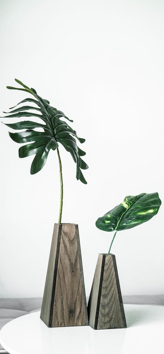绿植 龟背竹 花瓶 绿叶